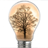 Innovation Basics: Image of lightbulb